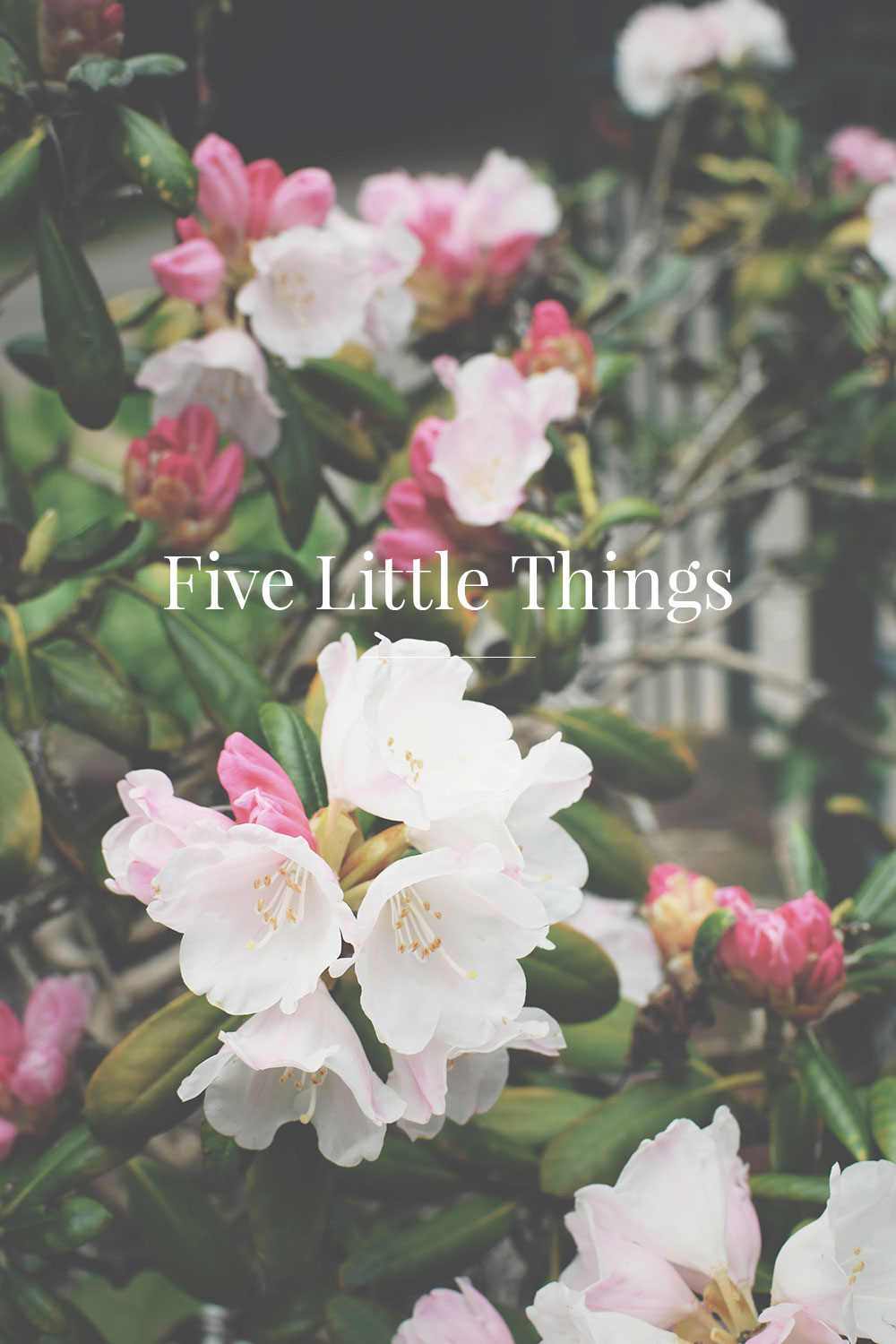 Five Little Things; A brain dump of all my thoughts - what's been happening lately, personal post