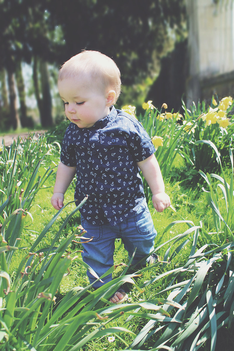 Toddler wearing George anchor shirt playing in daffodils at Lydiard Park