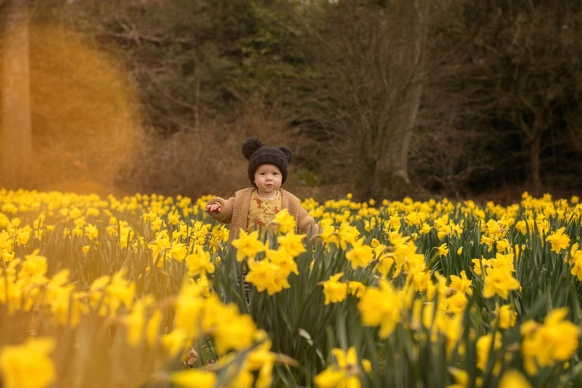Family of four with two young boys amongst the daffodils at Blenheim Palace and Gardens for the Easter weekend