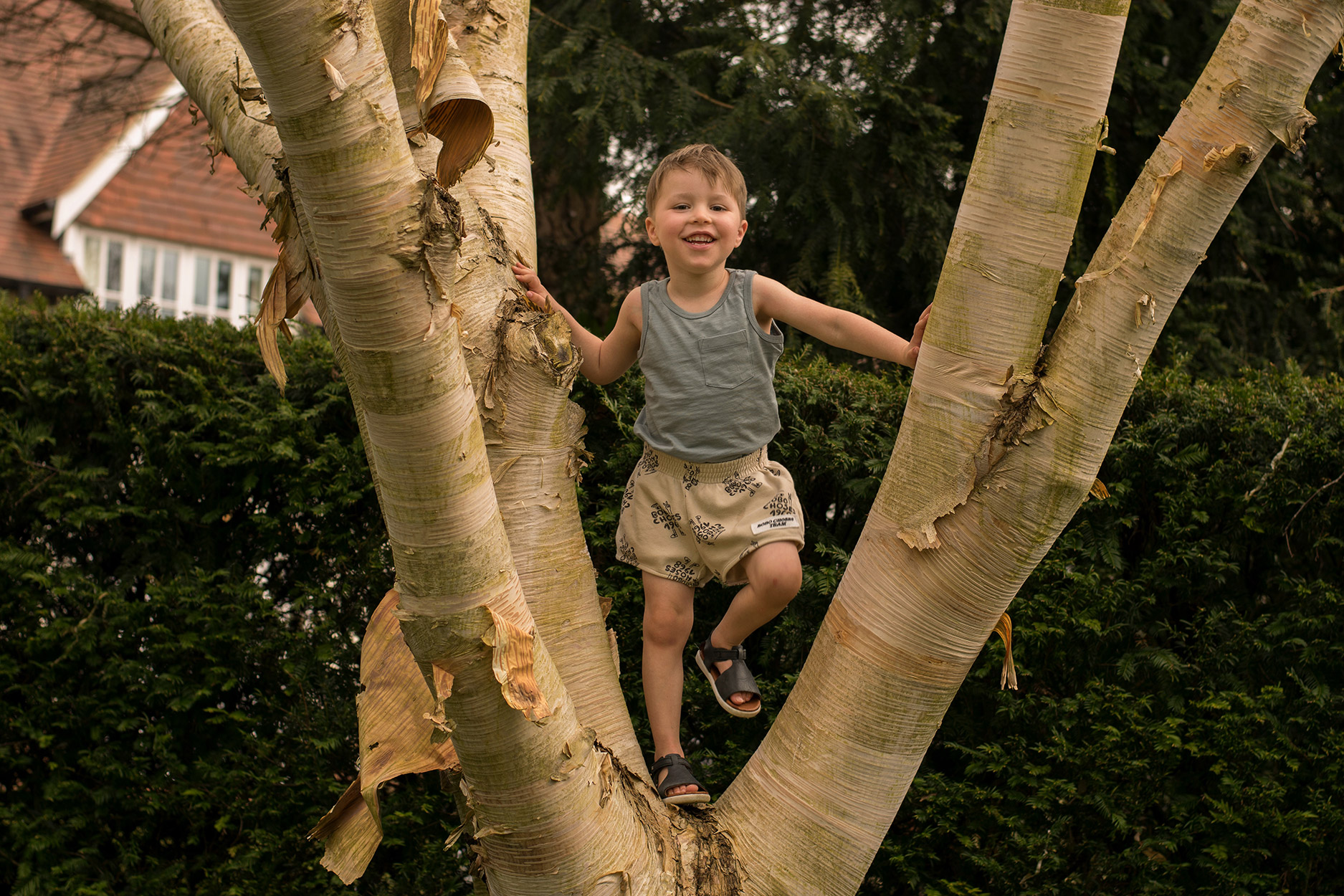 Young boy standing in tree wearing Bobo Choses 1968 shorts on Summers Day