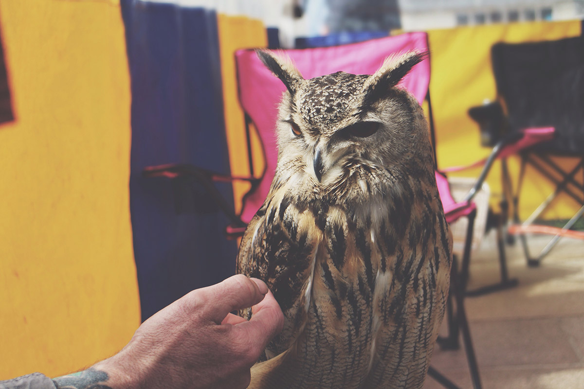 An Easter Weekend Catch-Up - Owl at market at Stratford-Upon-Avon