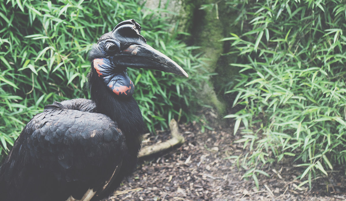 Toddlers' Day Out @ Exmoor Zoo, North Devon - Large black bird standing on one leg