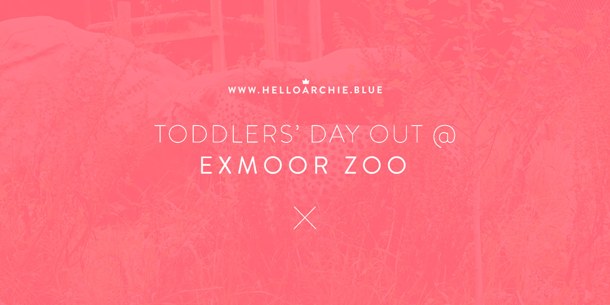 Toddlers' Day Out @ Exmoor Zoo, North Devon