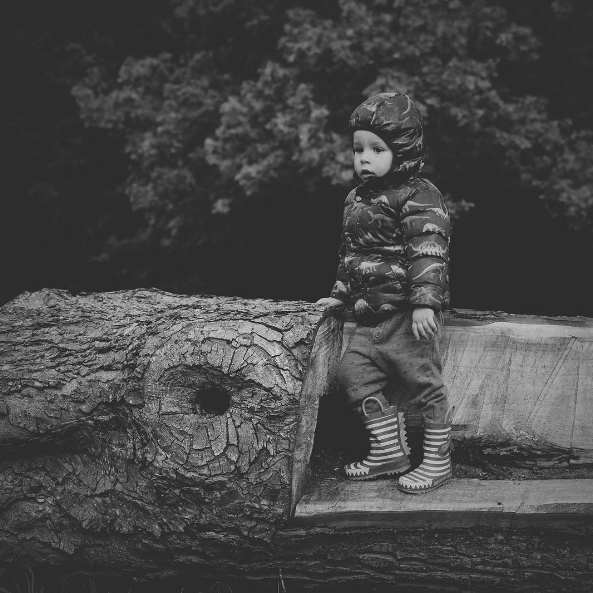 Our month in insta-snaps; October 2016 - Young toddler boy wearing Next dinosaur puffa jacket standing on broken tree branch at the park