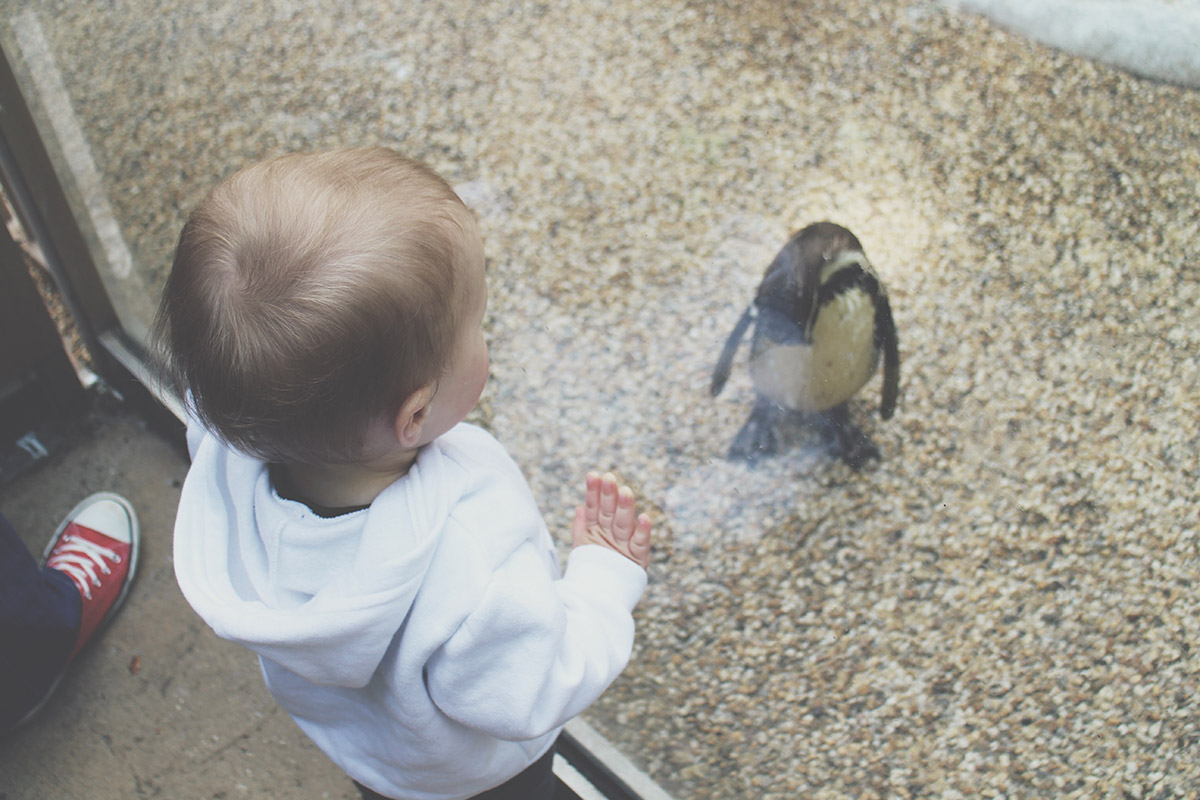 Toddlers' Day Out - Longleat Safari & Adventure Park; Penguin Island