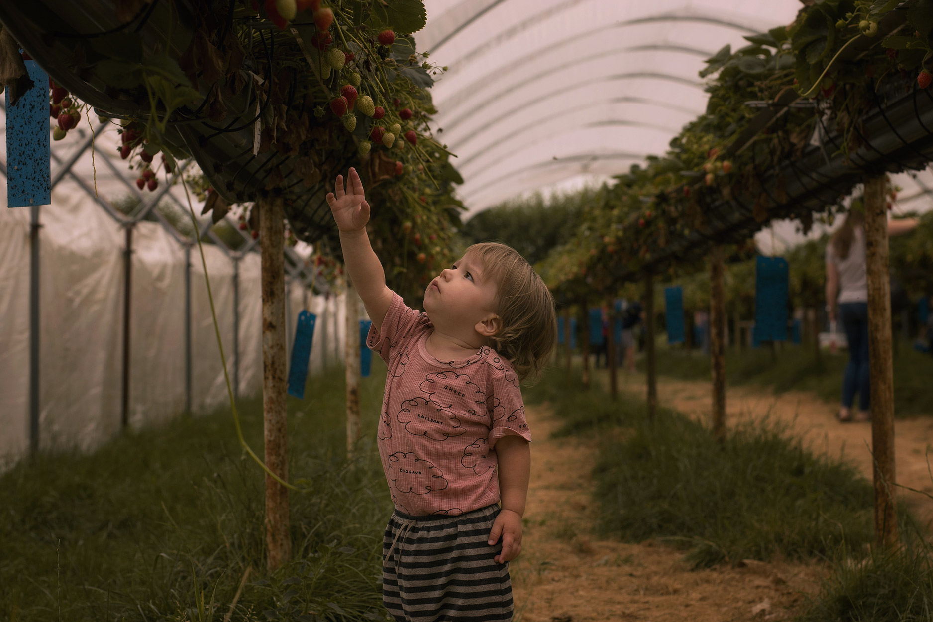 Mum and sons picking strawberries at Millets Farm, Oxfordshire, wearing Bobo Choses pink thoughts vest and One More in the Family harems