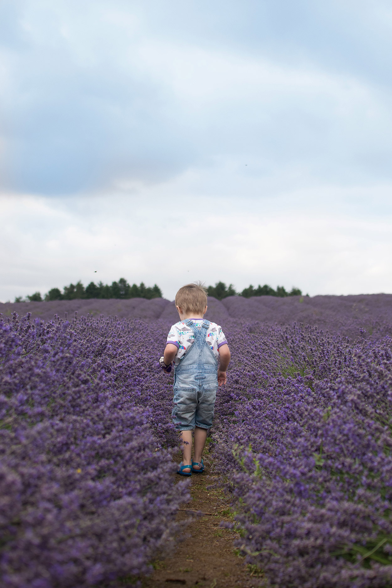 A trip to the Lavender Farm - Young boy wearing The Bunting Tree Brollies & Blizzards t-shirt standing amongst the lavender