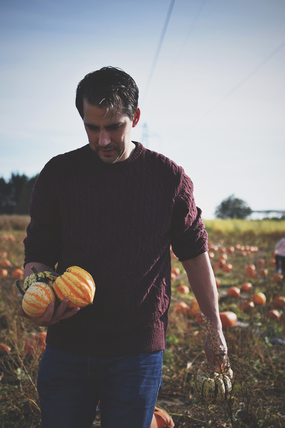 Picking Pumpkins & Scary Jabs — The Ordinary Moments #13; Daddy picking pumpkins at Millets Farm, Oxfordshire