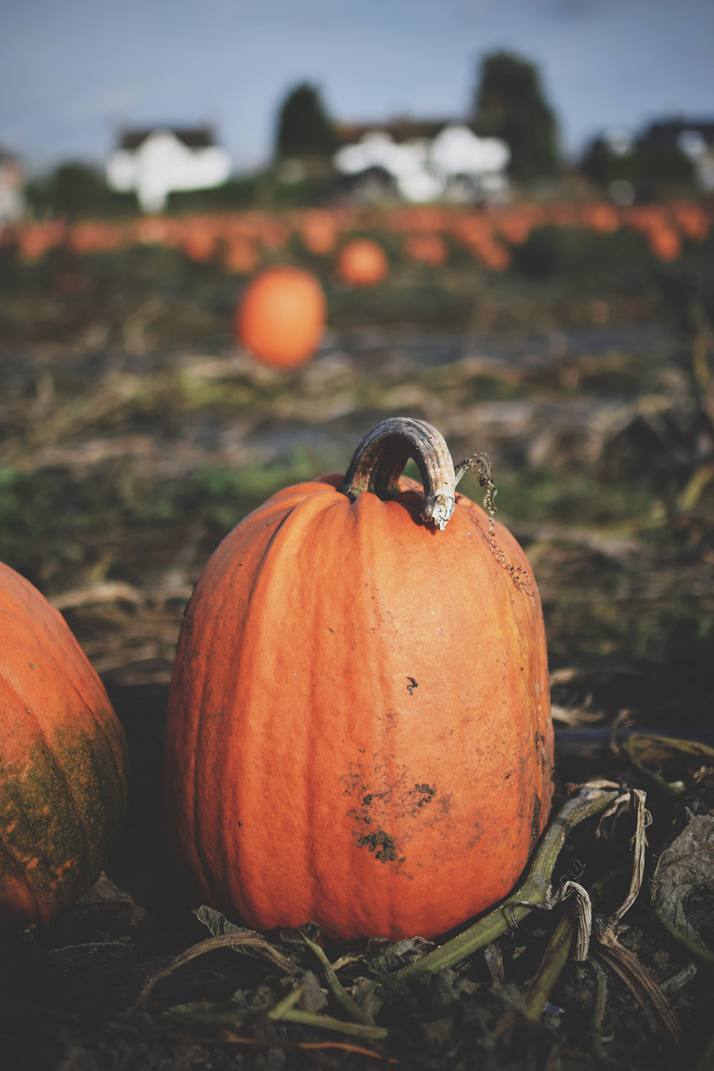 Picking Pumpkins & Scary Jabs — The Ordinary Moments #13; Toddler boy playing at the pumpkin patch on Halloween in Next jumper and Cars boots
