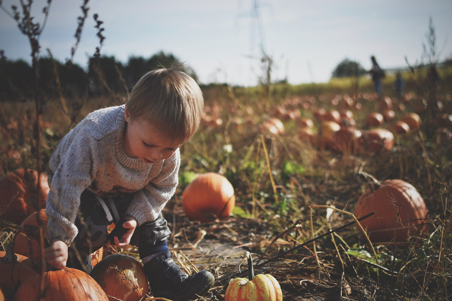 Picking Pumpkins & Scary Jabs — The Ordinary Moments #13; Toddler picking pumpkins at the patch at Millets Farm, Oxfordshire