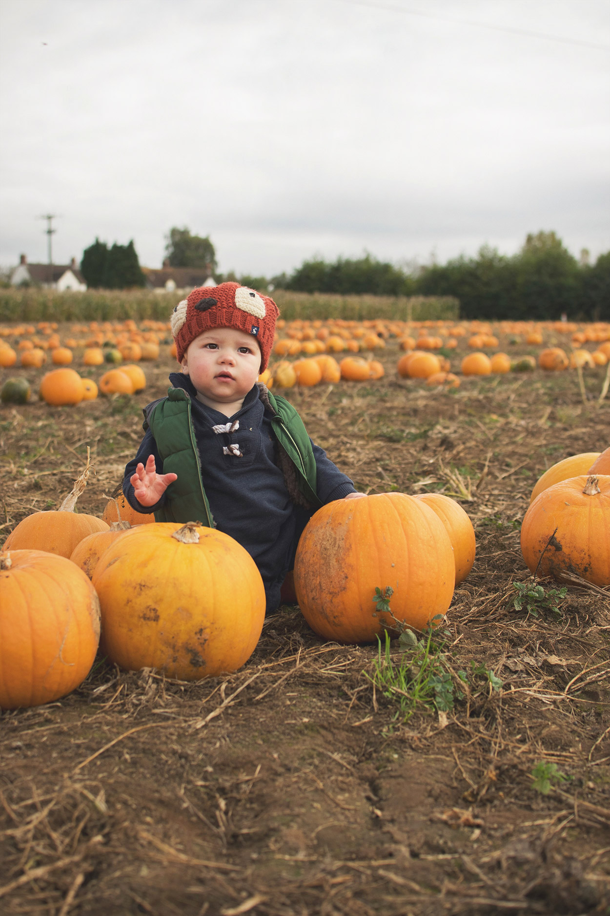 A family with two young boys wearing Joules fox hat and Osh Kosh stripy dungarees visiting Millets Farm, Oxfordshire, picking pumpkins for Halloween