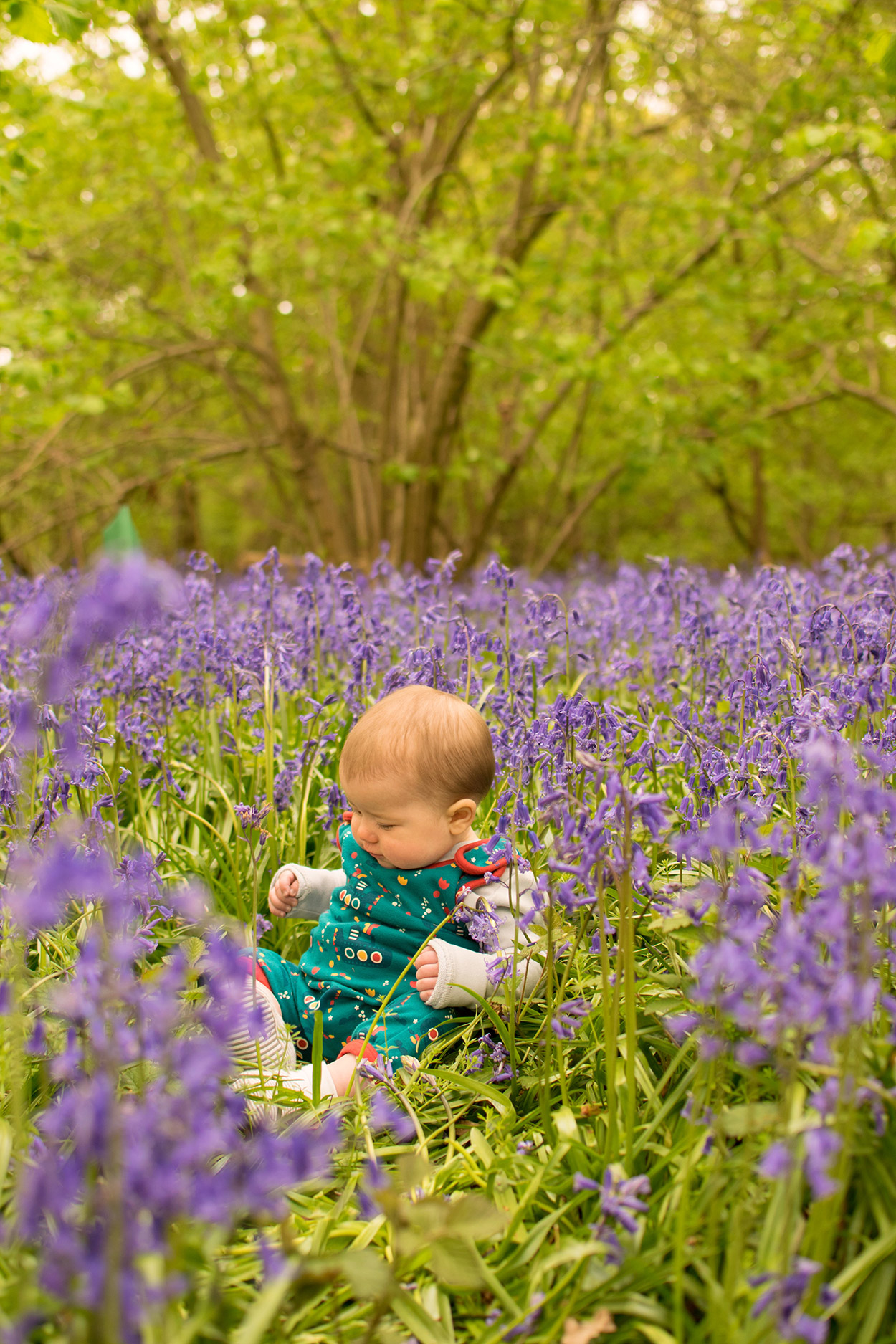 The Secret Bluebells. - Mother and her two boys playing amongst the beautiful bluebells in a secluded woodland wearing Joules hat, Little Green Radical submarine romper and Little Bird rainbow wellies playing