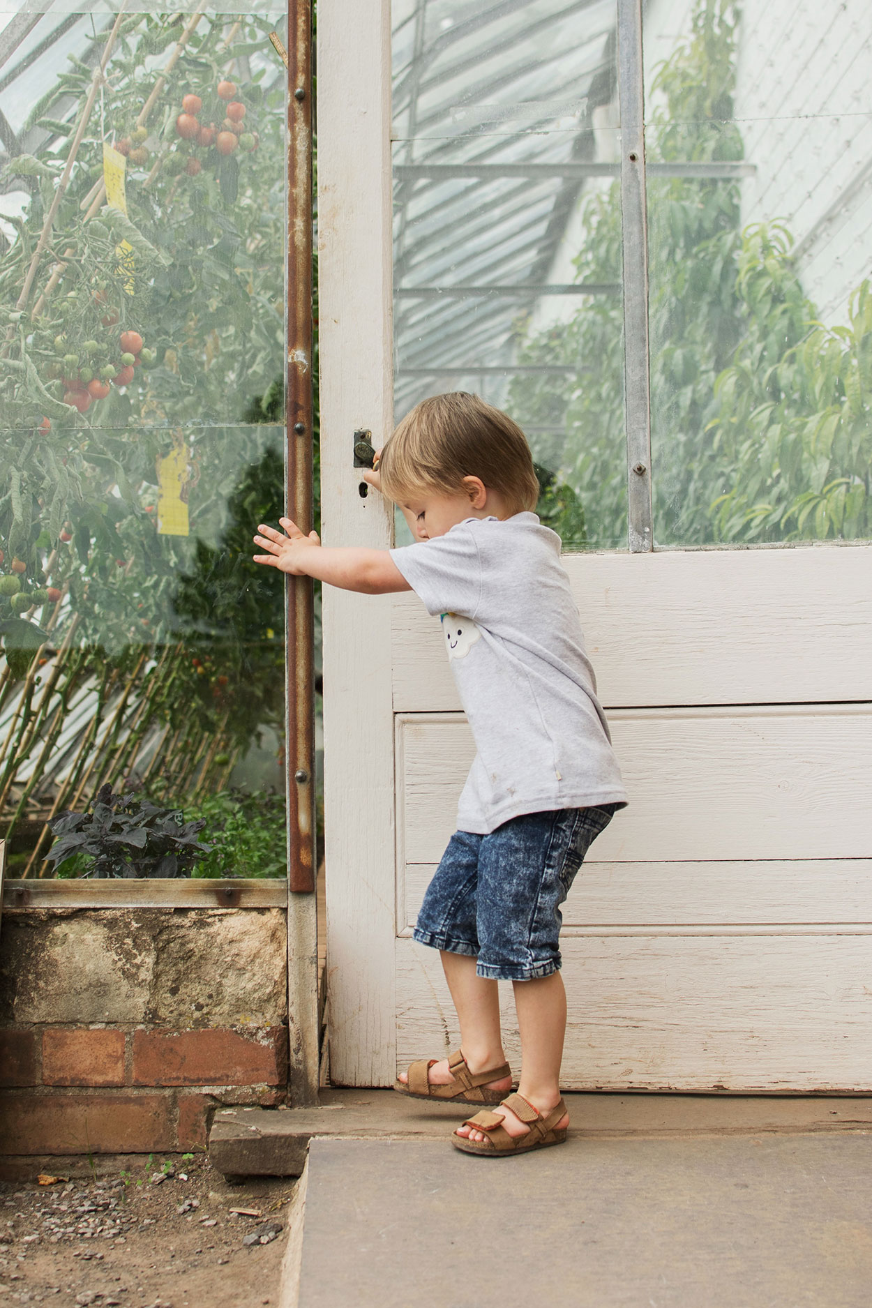 Young boy wearing Frugi rainbow applique t-shirt closing the door of the greenhouse at Tyntesfield Estate, Hampshire, National Trust