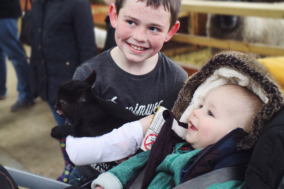 Young boy with brother holding baby goat at Roves Farm, Swindon