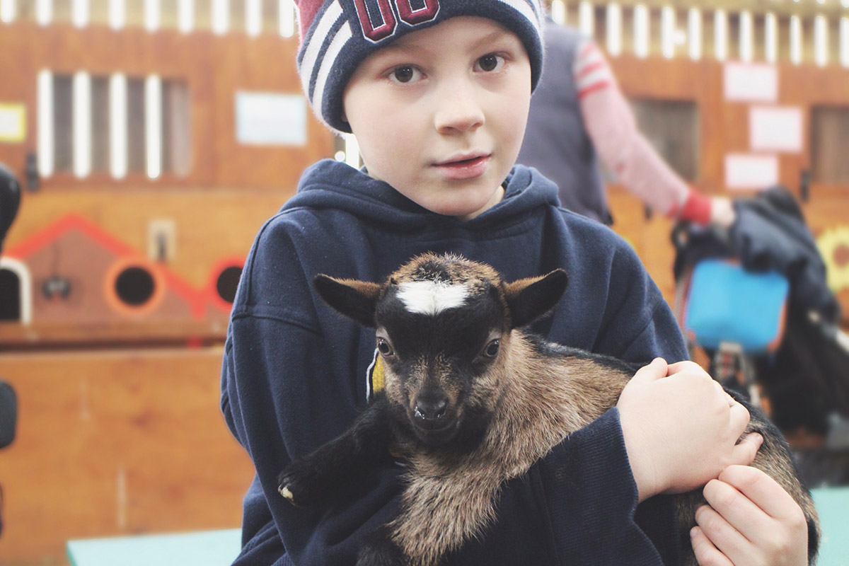 Young boy holding baby goat at Roves Farm, Swindon
